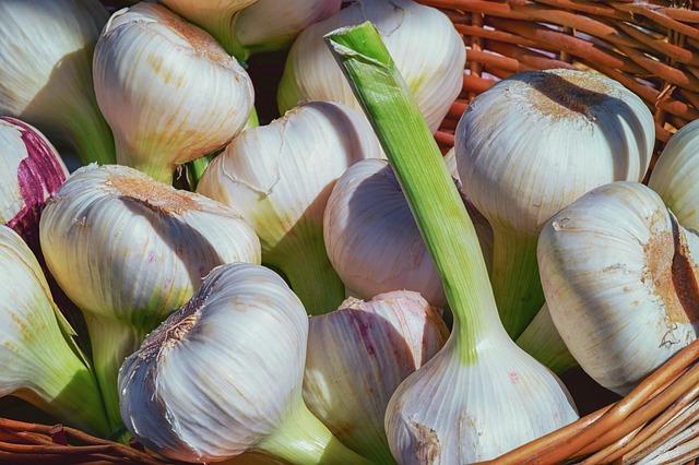 Growing Garlic in Autumn