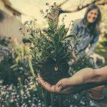 free family weekend - gardening