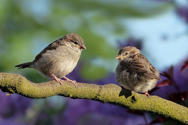 Sparrows resting on a branch