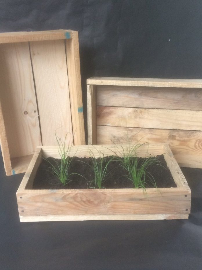 Recycled Seed Tray